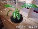 ★インテリアのプロが考えた「オリジナルミニガーデン」★幻の観葉植物★フィロデンドロン4★熱帯の溶岩と植物を組み合わせて