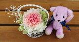 結婚祝い 誕生日プレゼント テディベア パープル と セレナ カーネーション 2色ピンク プリザーブドフラワー プリザ ブリザードフラワー ブリザード フラワー ブリザーブドフラワ