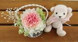 結婚祝い 誕生日プレゼント テディベア ライトピンク と セレナ カーネーション2色ピンク プリザーブドフラワー プリザ ブリザードフラワー ブリザード フラワー ブリザーブドフラ