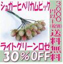 【即納】 プリザーブドフラワー 花材 30%OFF シュガーヒペリカムピック【ライトグリーンロゼ 袋 12本入】アルテフロール