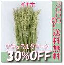 【即納】 プリザーブドフラワー 花材 30%OFF 稲穂 イナホ【ナチュラルグリーン 袋 約50本入