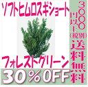 【即納】 プリザーブドフラワー 花材 30%OFF ソフトヒムロスギショート 【フォレストグリーン】 杉 大地農園