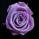 【即納】 プリザーブドフラワー 花材 スタンダード ラベンダー 1輪 フロールエバー