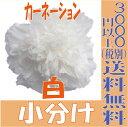 【即納】 プリザーブドフラワー 花材 カーネーション 【白 小分け 1輪入】大地農園 大地農園