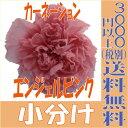 【即納】 プリザーブドフラワー 花材 カーネーション 【エンジェルピンク 小分け 1輪入】 大地農園