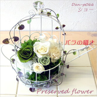 Combination of green & white show DAN-P066fs3gm that is flower プリザーブドフラワーアレンジメントフレッシュ which does not become refined