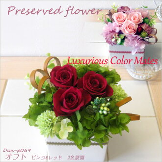 Two colors of flower プリザーブドフラワーアレンジメントオフト DAN-P069 pink & red development fs3gm which do not become refined