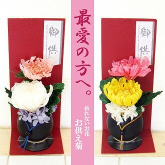 Flower プリザーブドフラワーアレンジメント offering chrysanthemum DAN-P073fs3gm which does not become refined