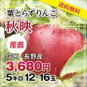 【送料無料】長野産 りんご 秋映 12玉〜16玉 5kg 葉とらずりんご プレゼントにも