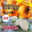 【送料無料】市田柿 極 2L/12個入 干柿・干し柿