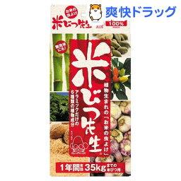 米びつ先生 1年間有効 35kgまでの米びつ用(1コ入)【米びつ先生】[キッチン用品]