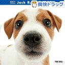 ザ ドッグ 2017年カレンダー ジャック ラッセル テリア(1コ入)【ザ ドッグ(THE DOG)】【送料無料】