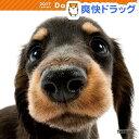 ザ ドッグ 2017年カレンダー ダックスフンド(1コ入)【ザ ドッグ(THE DOG)】【送料無料】