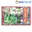 石蓮花茶(2.8g*30袋入)【中村カイロ協会】【送料無料】