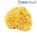 天然海綿ハニコム種 Mサイズ(1コ入)[スポンジ]【送料無料】