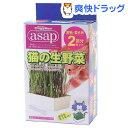 キャティーマン アサップ(asap) 猫の生野菜(2回分)【アサップ(asap)】[猫草]