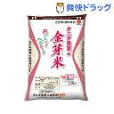 平成25年度産 タニタ食堂の金芽米(BG無洗米)(2.7kg)[お米]