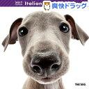 ザ ドッグ 2017年カレンダー イタリアン グレイハウンド(1コ入)【ザ ドッグ(THE DOG)】【送料無料】