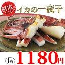 肉厚、柔らか、ぷりっぷり♪絶っ対ハマる!日本海で獲れた新鮮な真イカを使った【イカの一夜干し 1枚】【あす楽_土曜営業】バーベキューでも大人気!!海鮮、魚介の美味しい食べ物