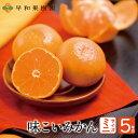 有田みかん 味こいみかんミニ 2Sサイズ 5kg 送料無料 国産 和歌山県 産地直送 早和果樹園