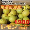 訳あり レモン 産地 瀬戸内 しまなみ海道 広島県 尾道市因島 約3kg 送料無料 レモン