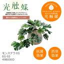 あす楽 光触媒 インテリアグリーン モンステラEG EG-03 498000D 観葉植物 造花 人工 フェイクグリーン