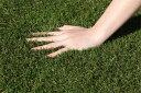 生活 雑貨 便利 芝 人工芝 防草人工芝