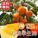 奈良県産最高級刀根早生柿 Lサイズ8玉又は2Lサイズ6玉  なくなり次第終了 送料無料 ご贈答に