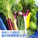 朝採り!三浦夏野菜セット【期間限定】