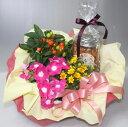 花鉢・観葉植物とスイーツのセット【赤い帽子のクッキー&チョコ...