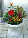 季節の寄せ植えW 【送料無料】【あす楽】【鉢花】
