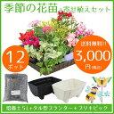 【送料無料】花苗 寄せ植え セット ガーデニングに最適です♪ 季節の花苗12ポット+寄せ植えセット【元気でフレッシュな苗】 通販 秋