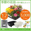 【送料無料】花苗 寄せ植え セット ガーデニングに最適です♪...