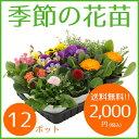 季節の花苗12ポット【送料無料/元気でフレッシュな苗/肥料のおまけ付き】