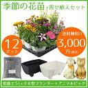 季節の花苗12ポット+寄せ植えセット【送料無料/元気でフレッシュな苗/肥料のおまけ付き】