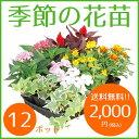 季節の花苗12ポット セット【送料無料 元気でフレッシュな苗】