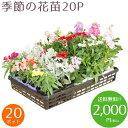 【送料無料!!】季節の花苗20ポット 冬セット(5種類 x 各4ポット)がいつでもこの価格です!色々なアレンジでお花のガーデンを造れます♪【Everyday Same Price!!毎日がお買い得♪】