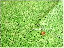 キャンディーパーティーシリーズのプリント生地-芝生でゴロン-...