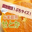 愛媛県産露地栽培せとかご家庭用ぷちサイズ 約5kgしっかり完熟の濃い味わい!
