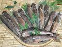 送料無料!浜の漁師常備食 製造元直販北海道稚内産汐ホッケ12本
