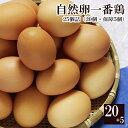 自然卵一番鶏「25個詰」(20個+破損保...