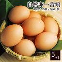 放し飼い 自然卵 一番鶏 「6個詰」 [ 鶏卵 千葉県産 香...