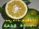 ★Suigun Roman★香り・酸味最高・減農薬栽培★大三島産・冬だいだい