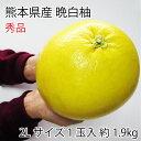 熊本県八代特産 晩白柚(ぱんぺいゆ) 秀品 1玉(約2kg) 特大玉2Lサイズ 化粧箱入