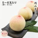 (6月下旬より発送)  岡山産白桃 5〜6玉 約1.5kg (キング)  化粧箱入り 光センサ