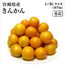 宮崎県産 金柑(きんかん) 秀品 L〜2Lサイズ 1kg...