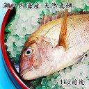 瀬戸内海産 活け締め 天然真鯛 1kg前後 (贈答用)