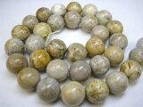 【連売り商品】フォシルコーラル(珊瑚化石)Φ12.2±0.2mm