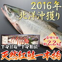 北海道産天然紅鮭一本物 約2.2kg姿切り身(半身甘塩/半身粕漬け)化粧箱入り【送料無料】紅さけ、鮭、サケ【RCP】