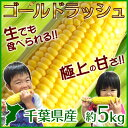 とうもろこし ゴールドラッシュ 千葉県産 約5kg 送料無料